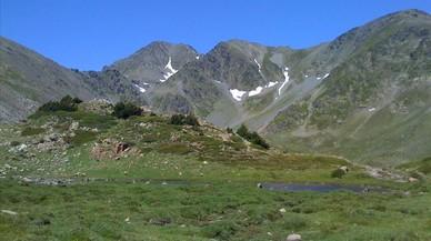 El cambio climático aumenta la variedad de plantas en la alta montaña