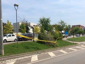 Cordón policial ante la caída de un árbol en Rubí.