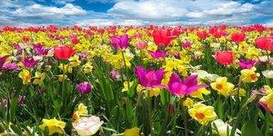 Con la llegada de la primavera las flores retoman su colorido espectacular.