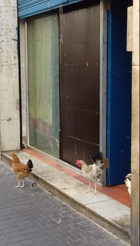 """""""Okupación 2.0: ahora, con gallinas"""""""