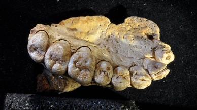 Los primeros 'Homo sapiens' salieron de África 60.000 años antes de lo que se pensaba
