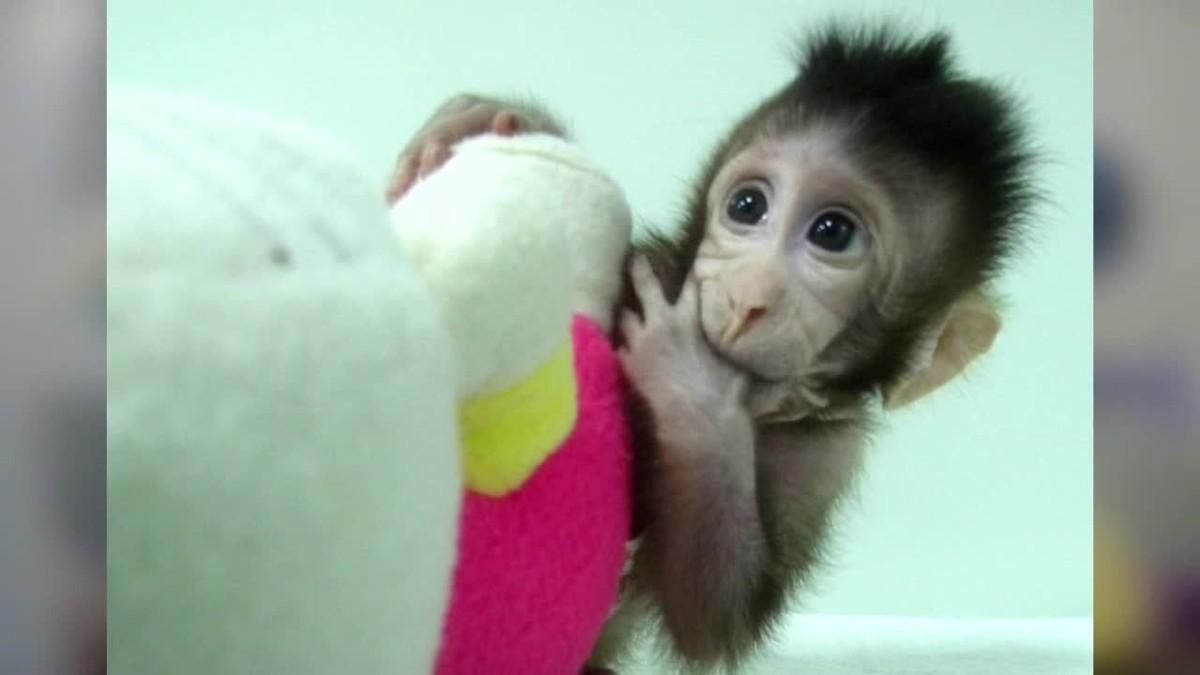 La ONG de defensa de los animales PETA calificó hoy de espectáculo de terror el experimento hecho por un equipo de científicos chinos.