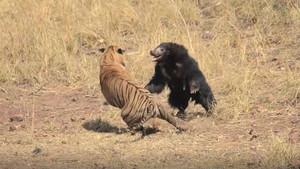 Captura de pantalla del vídeo subido a la cuenta de Facebook del safari
