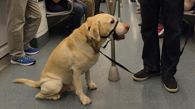 Un perro en el metro de Barcelona el 1 de octubre del 2014, atado y con bozal, según la ordenanza municipal que entró en vigor ese mismo día.