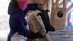 Una campanya mundial reclama la prohibició dels mercats d'animals vius