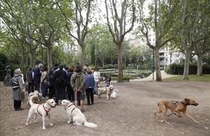 Perros sueltos, ayer, en la pradera del Turó Park. Al fondo, el lago con los nenúfares.