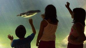 Tres visitantes del Zoo, ante el acuario de los pingüinos.