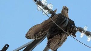 Una ave enganchadaen un tendido eléctrico.