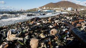 Aspectode las costas de Kamchatka (Rusia) donde se acumularon cientos de animales muertos.