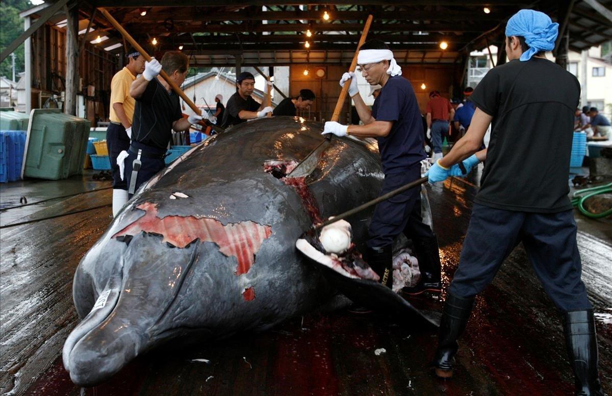 Varios trabajadores despiezan una ballena en el puerto de Minamiboso, al sureste de Tokio.