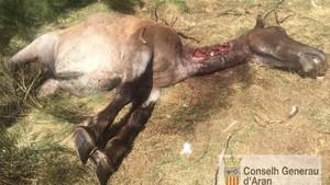 La yegua atacada por el oso Goiat en Bausen.