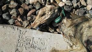 Un galgo muerto en una vía del tren de Sevilla.