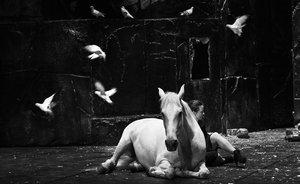Las palomas, el caballo y Camille Decourtye, en una escena de 'Falaise'.