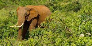 Tres suposats caçadors furtius moren en un tiroteig en una reserva de Kenya