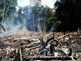 La pérdida de bosque nativo corresponde a la superficie de Ecuador.