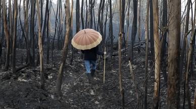 Los voluntarios vuelven a rescatar Galicia