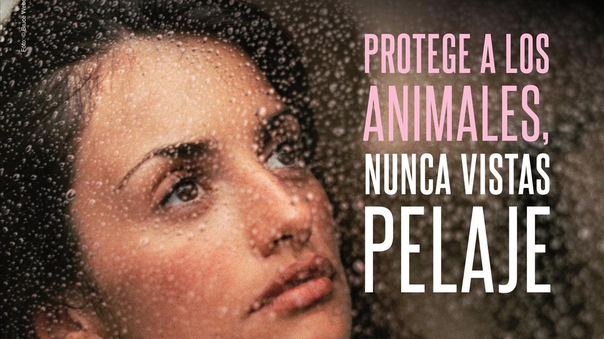 Penélope Cruz, en la campaña de Peta.