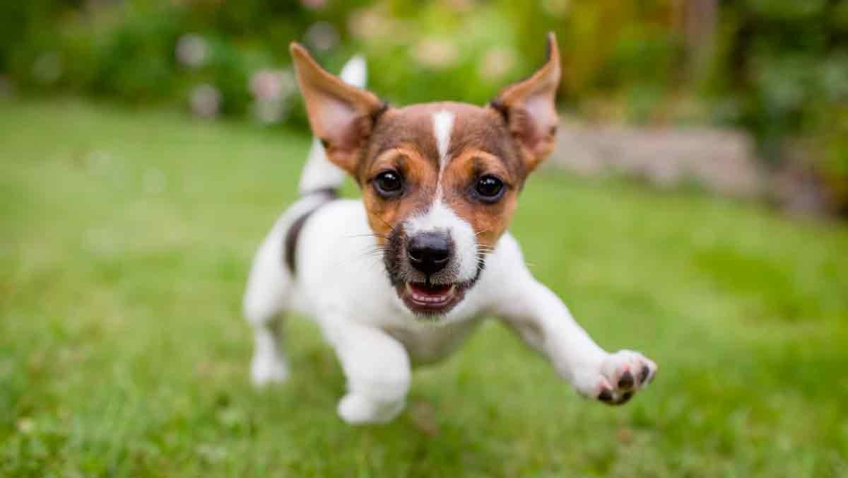 Vinculación segura e invisible con las mascotas