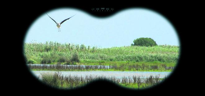 9 lugares donde observar aves a vista de humano