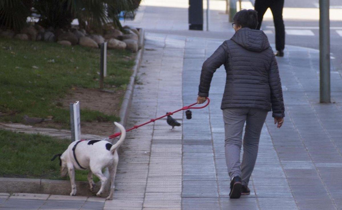 Perro ataca a su dueño cuando maltrataba a la mujer