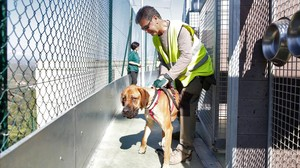 La CUP denuncia el sacrifici de 68 gossos a la gossera de Barcelona i els voluntaris ho desmenteixen
