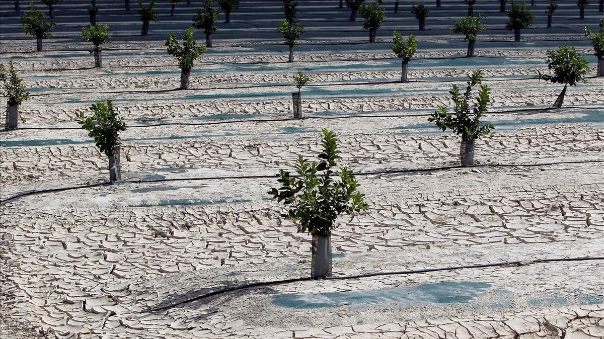 Un grau més i un 18% menys de pluja en una Espanya en plena crisi climàtica