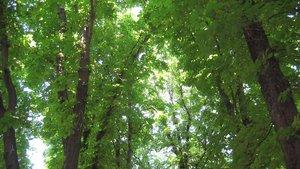 Árboles en un bosque.