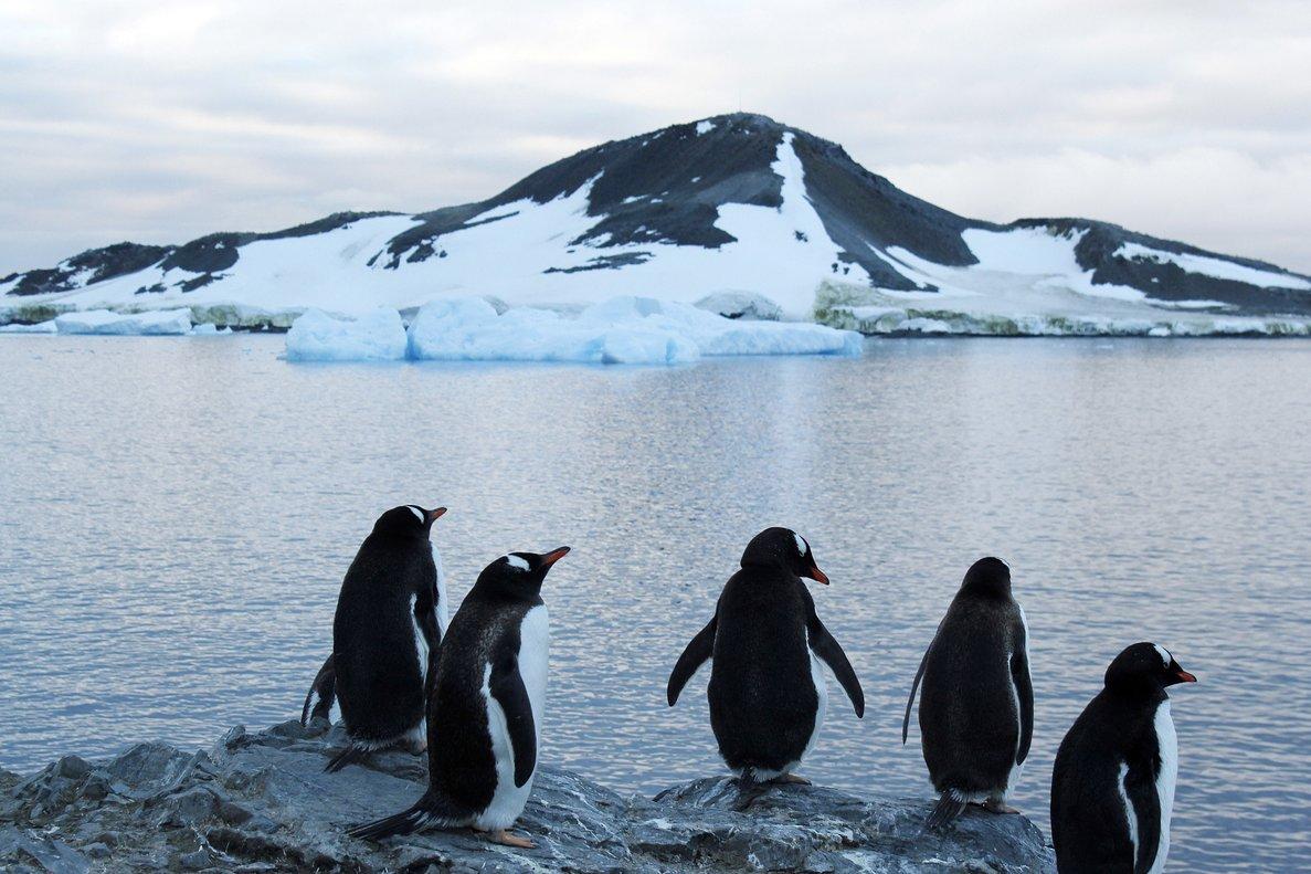 """Los hechos sucedieron en la ciudad de Odense, donde la pareja de pingüinos del mismo sexo decidió quedarse con el pequeño polluelo a quien vieron """"abandonado""""."""