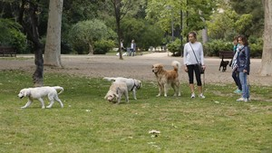 Perros en el Turó Park, en una imagen de archivo.