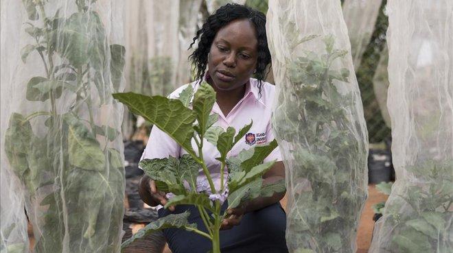 Tresors de l'horta africana