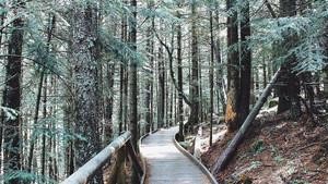 Un camino entre árboles en el Pirineo.