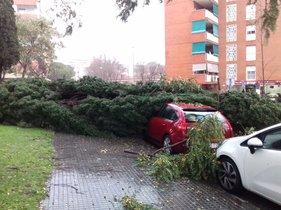 Árbol caído sobre un coche en Gavà.