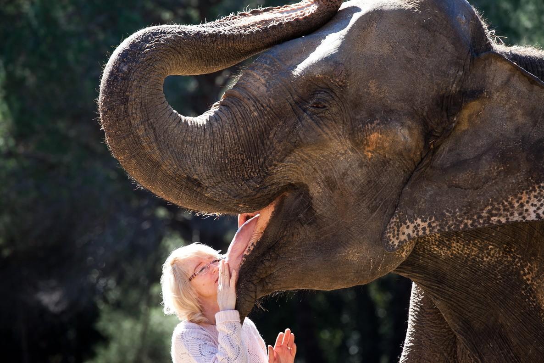 """""""Ojalá los elefantes os pisen"""": los circos denuncian a los animalistas por amenazas de muerte"""