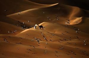 Las palomas vuelan sobre el desierto de Liwa, a 250 kilómetros al oeste del emirato del Golfo de Abu Dhabi.
