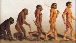 Evolució de l''australopithecus', l''homo erectus' i l'homo sapiens' a l'home.