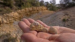 Fósiles hallados en el lugar en el que fue sorprendido el investigado, en el Clot de Sant Romà, en Bellprat (Anoia).