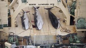 Ballenas capturadas en un pesquero japonés.