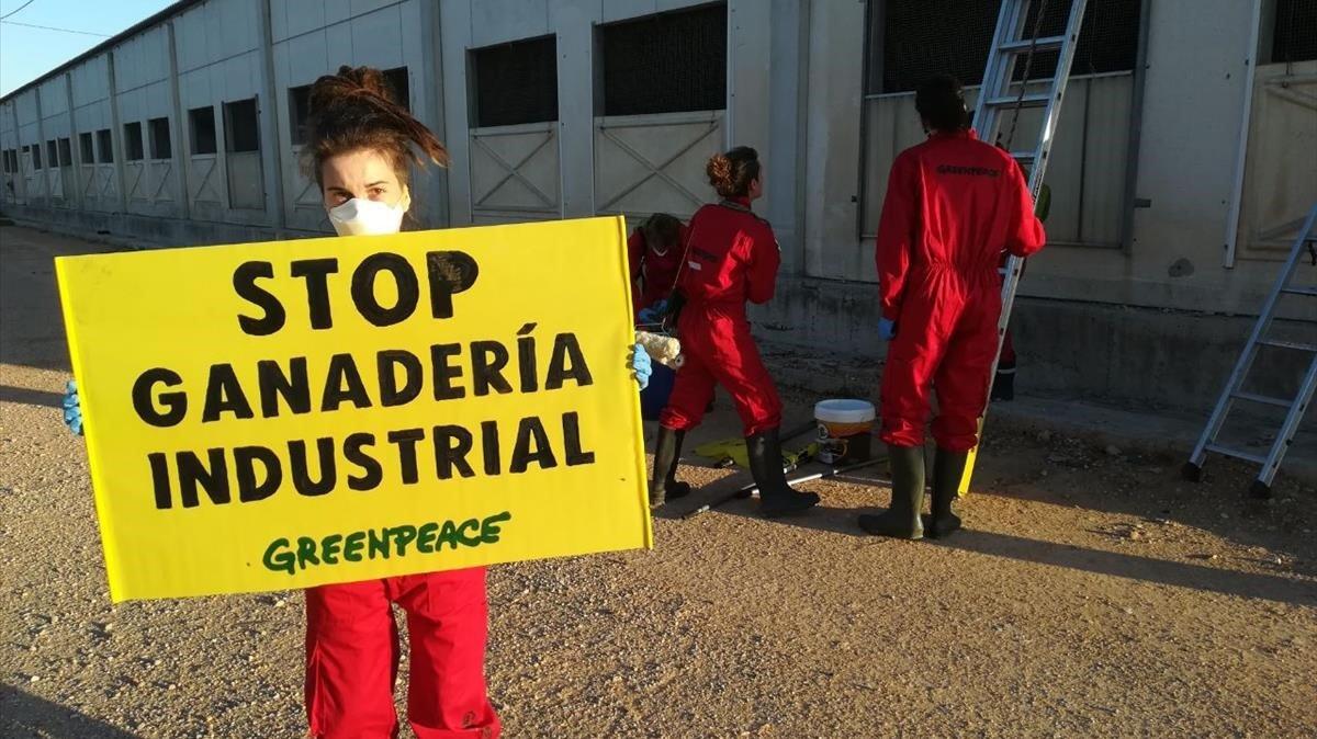 Greenpeace en la granja del grupo Cefusa en Hellín (Albacete).