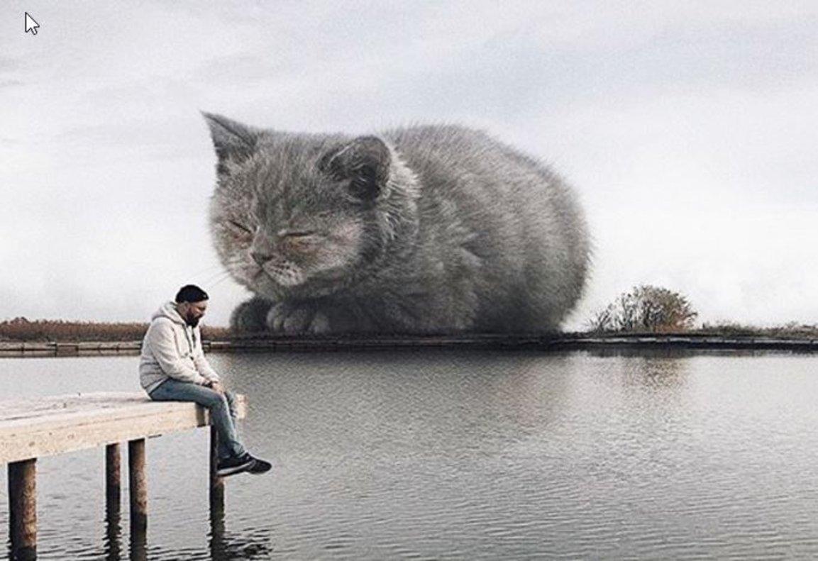 Los gatos gigantes que triunfan en Instagram
