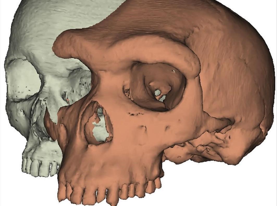 Imagen de la reconstrucción del cráneo utilizada en el estudio.