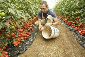 Según la FAO, en el mundo se desperdicia entre un cuarto y un tercio de los alimentos producidos anualmente para consumo humano.