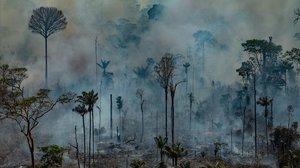 Viaje al kilómetro cero de la destrucción de la Amazonía