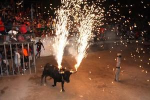 Un toro 'embolat', durante las fiestas de Masdenverge, en el Montsià.