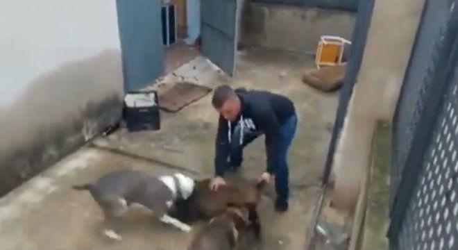 Las duras imágenes del brutal maltrato a un jabato en un pueblo de Valencia