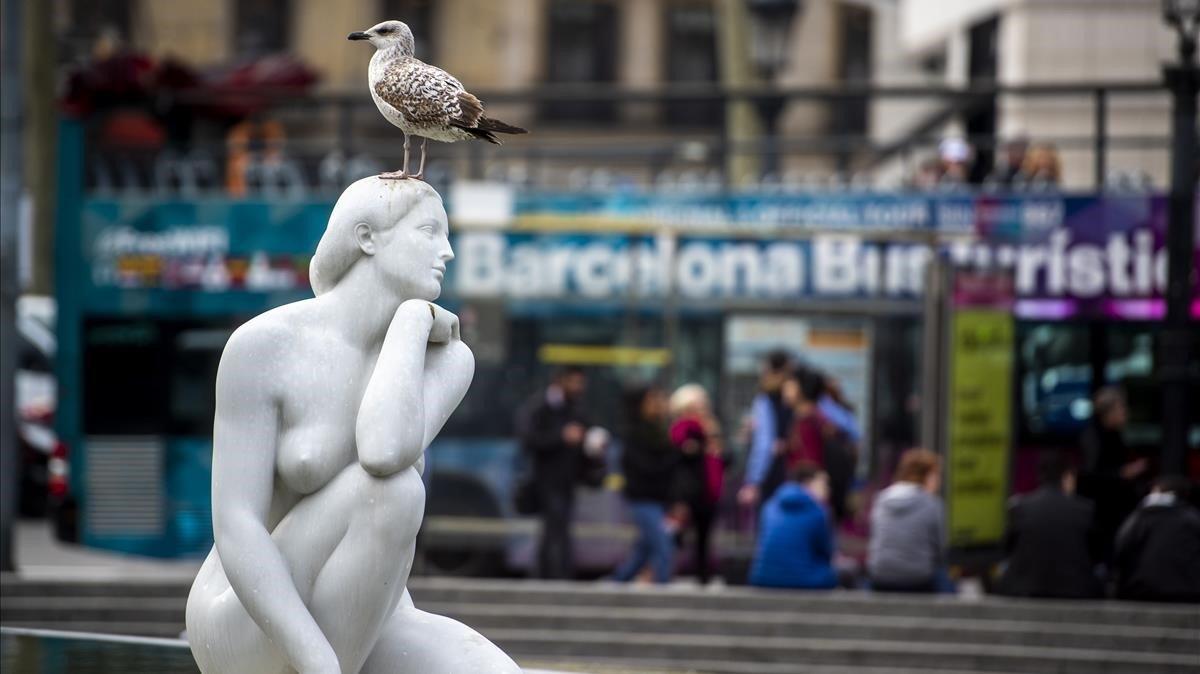 Gaviotas sobre la escultura La diosaen plaza Catalunya, con un bus turístico detrás.