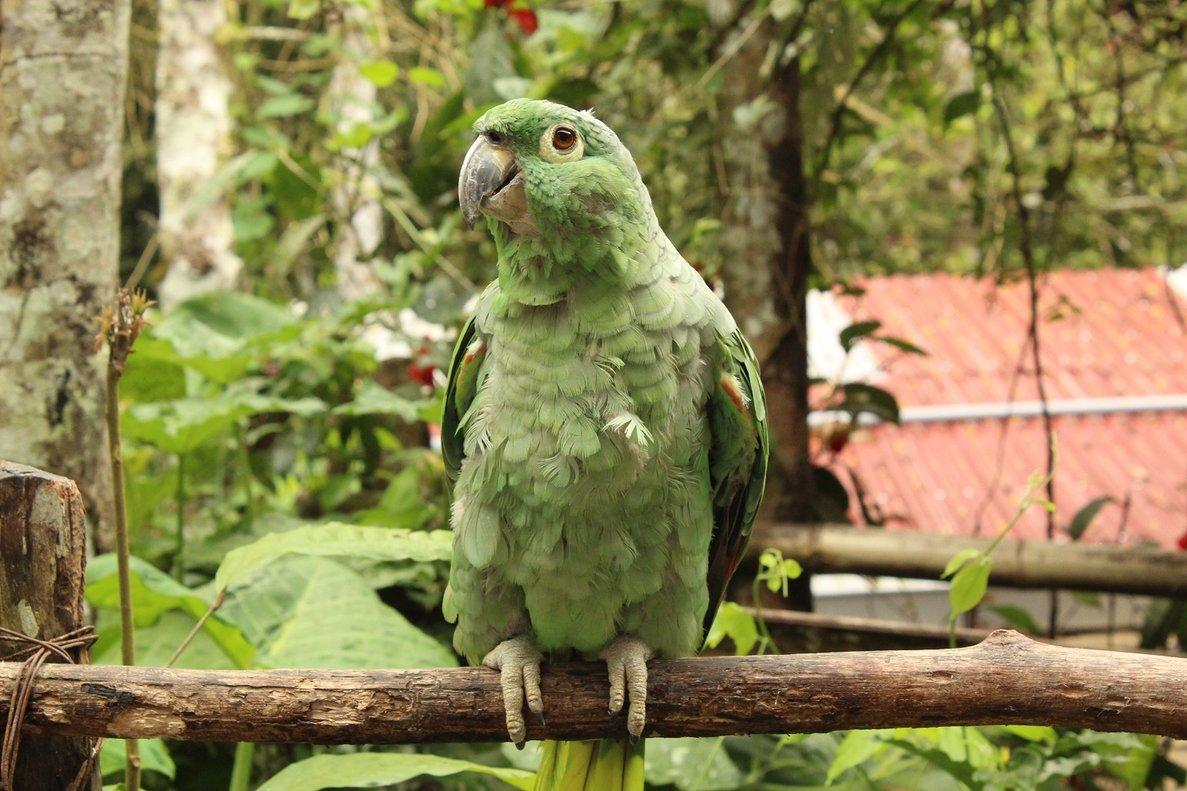 El loro gigante vivió en un bosque subtropical rico y diverso con muchas especies de palmeras y laureles.