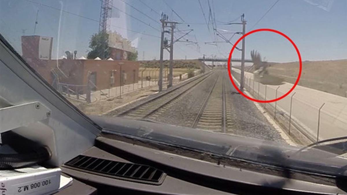 Captura de imagen de una grabación de vídeo instalada en un tren AVE . La flecha roja muestra un pájaromomentos antes de la colisión.