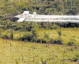 Un avió fumiga amb glifosat una plantació a Colòmbia.