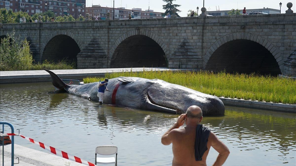 Escultura hiperrealista de un cachalote en el rio Manzanares.