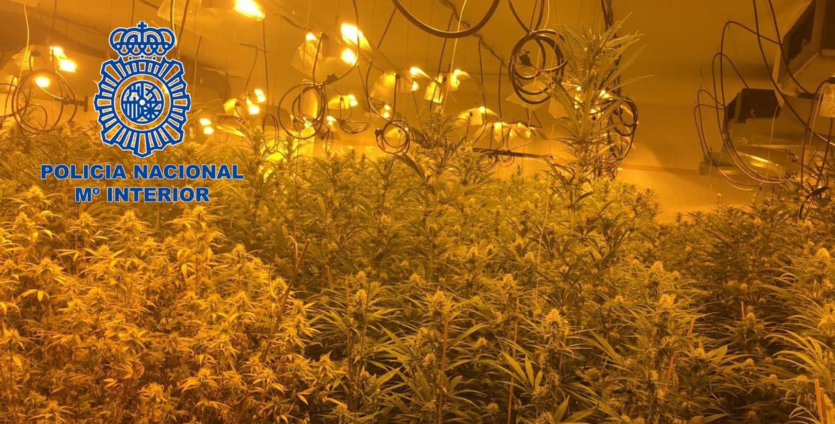 Detenidos 24 narcos que enviaban marihuana a reino unido - Plantaciones de marihuana interior ...
